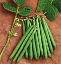 خواص شگفتانگیز لوبیا سبز؛ از افزایش قدرت باروری تا کاهش افسردگی